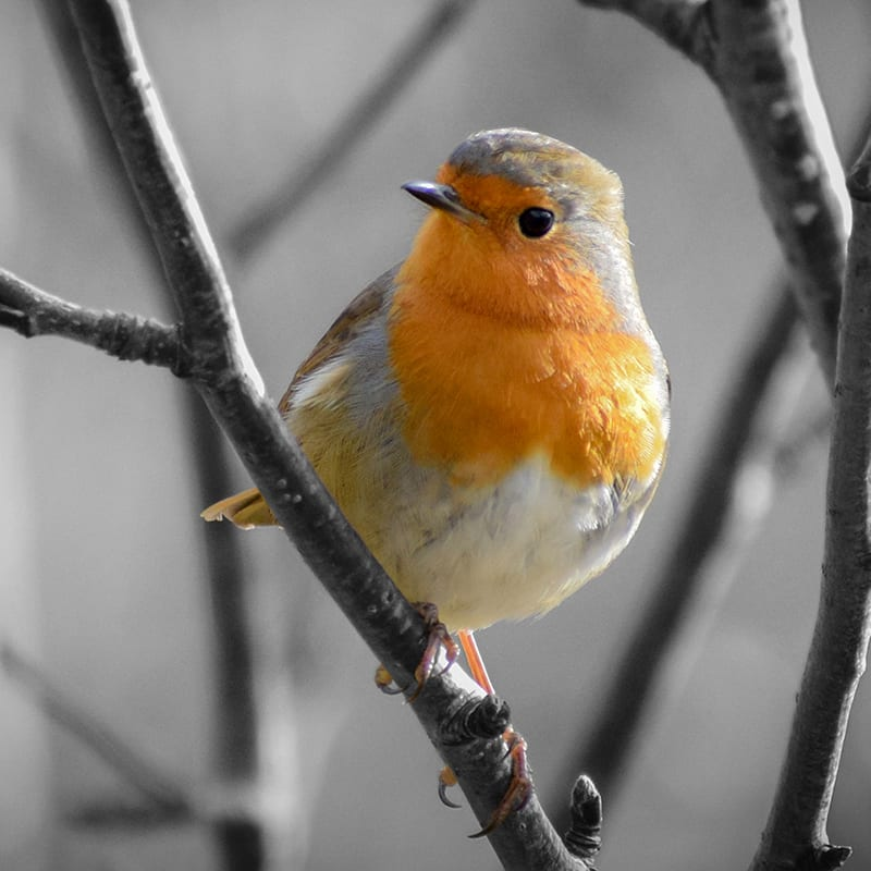 wordpress support from Eden Valley Creative. Robin package.